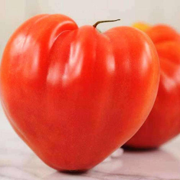 Oxheart Tomato Seeds (500mg) - My Patriot Supply