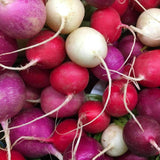 Organic Easter Egg Radish Seeds (1g) - My Patriot Supply