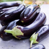 Organic Long Purple Eggplant Seeds (250mg) - My Patriot Supply