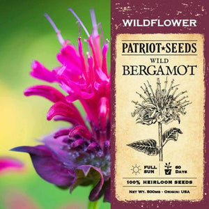 Wild Bergamot Herb Seeds (500mg) - My Patriot Supply