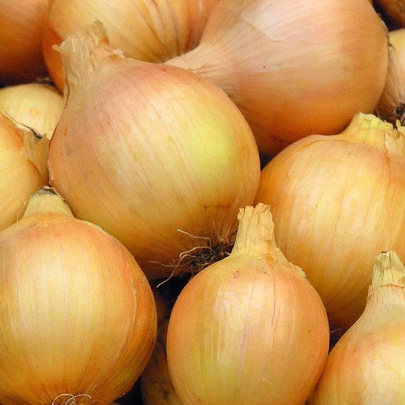 Yellow Sweet Spanish Onion Seeds (500mg) - My Patriot Supply