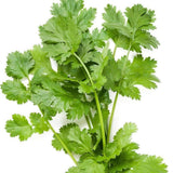 Organic Coriander-Cilantro Herb Seeds (500mg) - My Patriot Supply