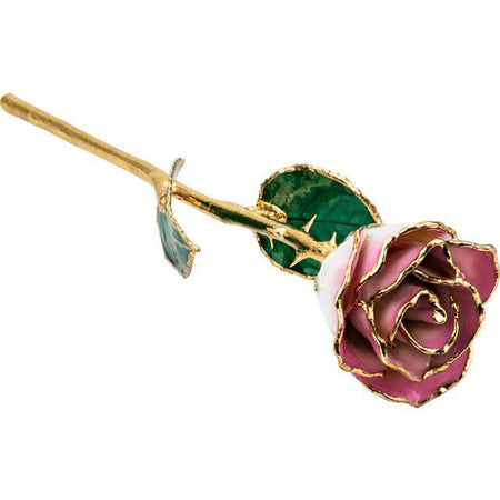 Giacobbe & Company Lacquered Cream Pink Rose with Gold Trim