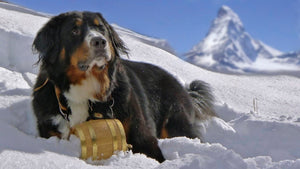 Alpen Schatz® luxurious Swiss dog collars and Swiss barrels or Alpine kegs represent a family craft dating back over 200 years. Made of the finest leather they are durable and crafted to last the lifetime of the dog. They also make perfect gifts.