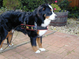 Swiss Draft Harness