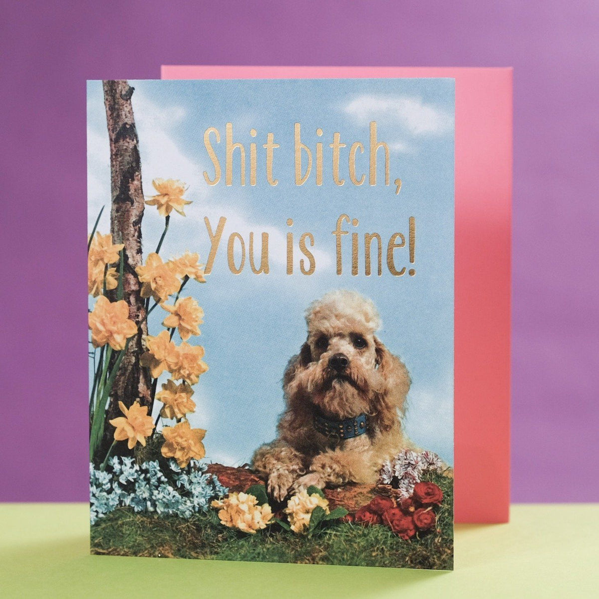 Shit Bitch, You is Fine Card - Smitten Kitten - AlwaysFits.com