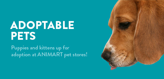 Animart Pet Stores, Inc.