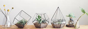 Empty Terrariums