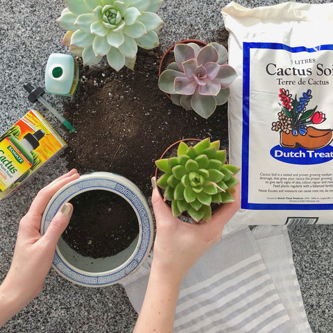 Buy Cactus soil online and ship