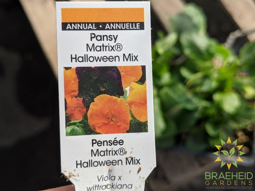 Pansy Matrix 'Halloween Mix' - NO SHIP -
