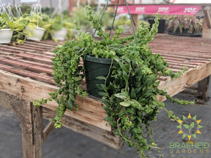 Curly Lipstick Hanging Basket