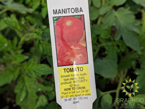 Manitoba Tomatoes - NO SHIP -