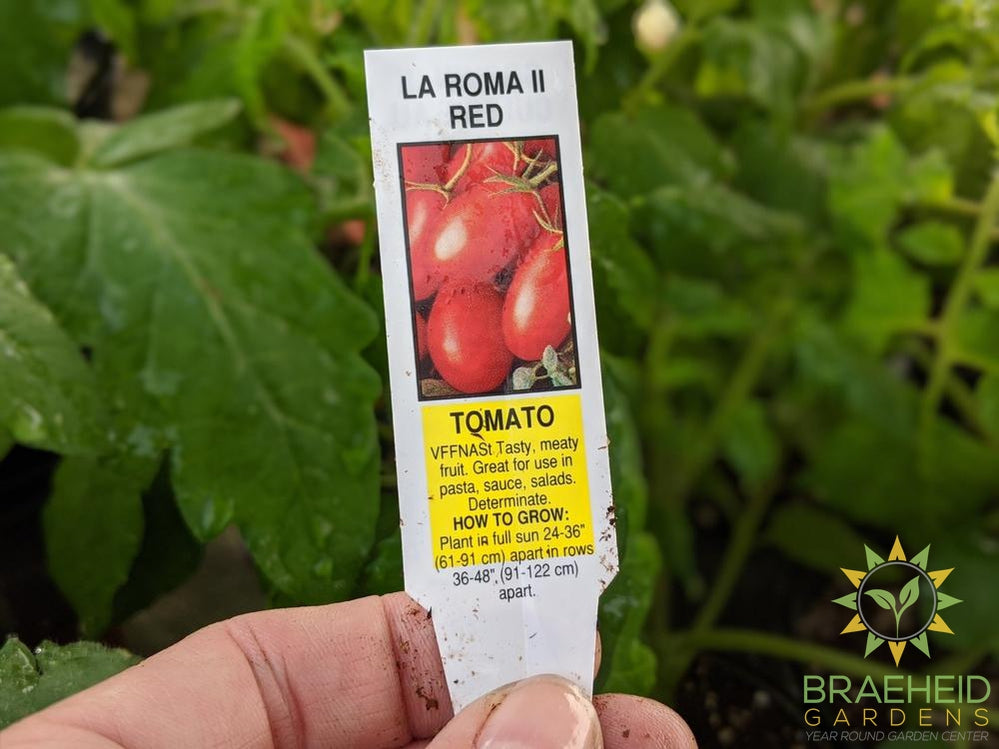 La Roma II Red Tomatoes - NO SHIP -