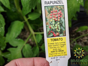 Rapunzel Tomatoes - NO SHIP -