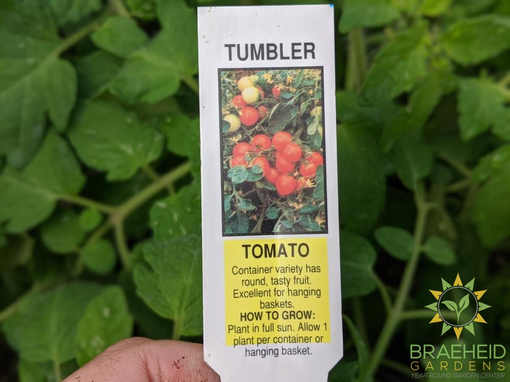 Tumbler Tomatoes - NO SHIP -
