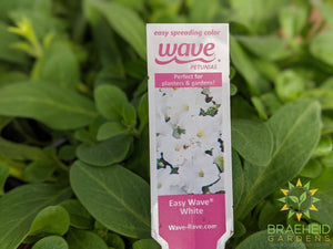 Petunia Easy Wave 'White' - NO SHIP -
