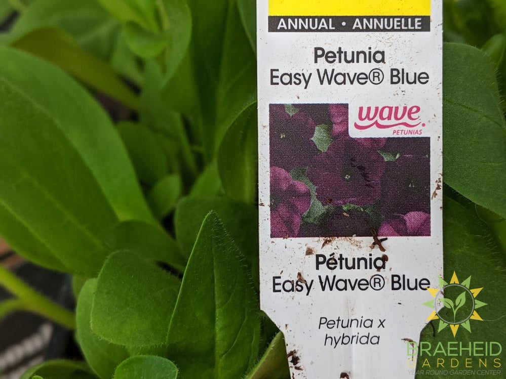 Petunia Easy Wave 'Blue' - NO SHIP -