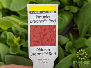 Petunia Dreams 'Red' - NO SHIP -
