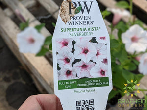 Supertunia Vista 'Silverberry' PW - NO SHIP -