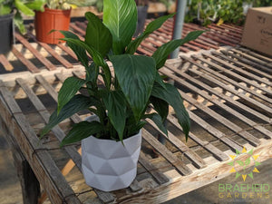 Alex Gloss Ceramic Planter