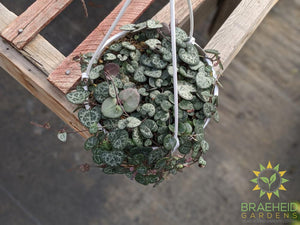 String of Hearts Hanging Basket
