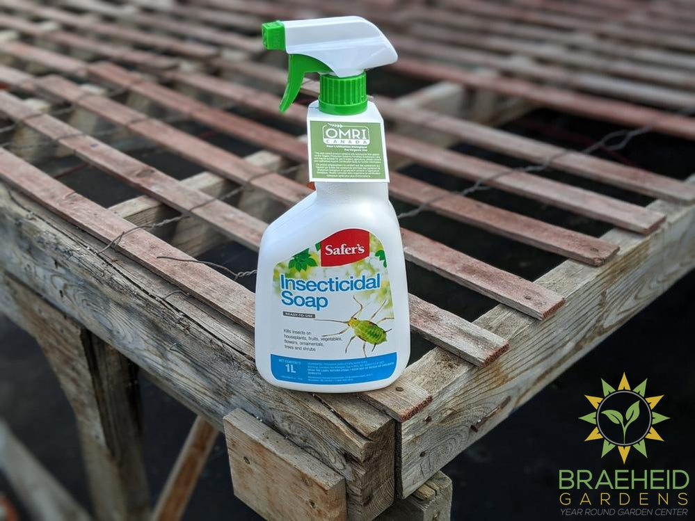 Safer's Insecticidal Soap RTU