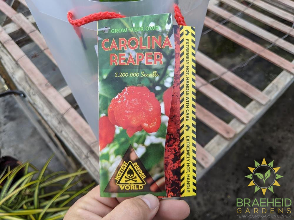 Carolina Reaper - NO SHIP -