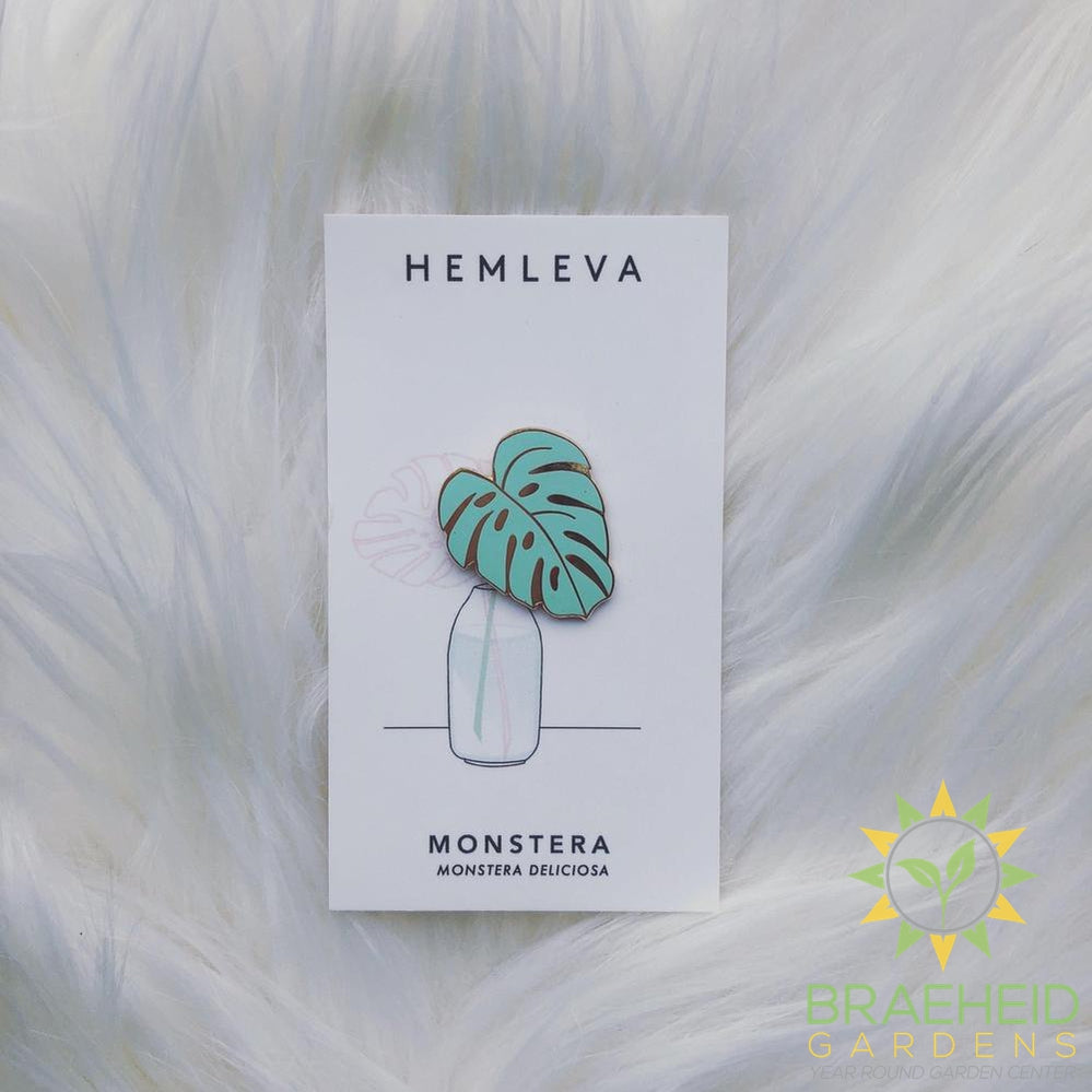 Monstera Green