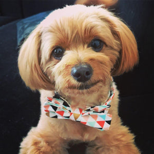 Multicolored Banner Dog Bow Tie Collar