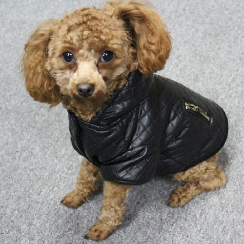 Leather Two Piece Set For Dogs