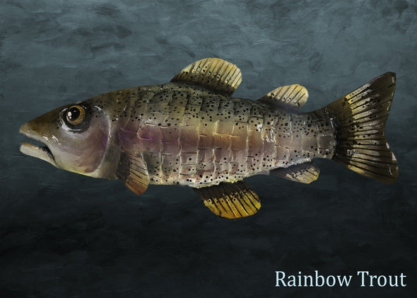 Rainbow Trout Shingle Fish