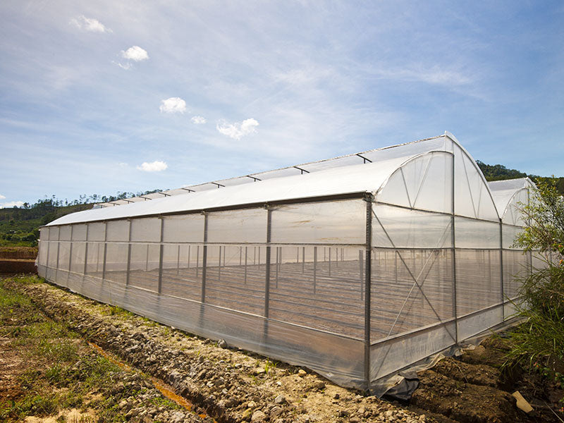 Greenhouse Plastic Film Clear Polyethylene  Year Uv Resistant Cover 10 Ft Wide