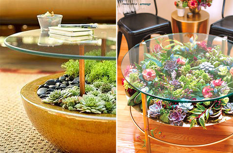 glass coffee table with succulent garden on lower shelf