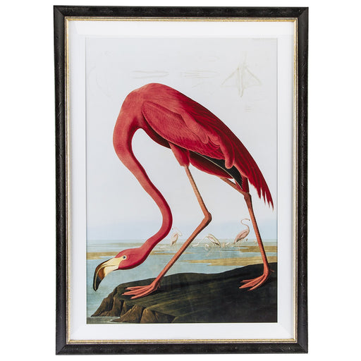 Audubon Flamingo (Black Frame)