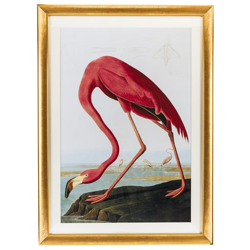 Audubon Flamingo (Gold Frame)