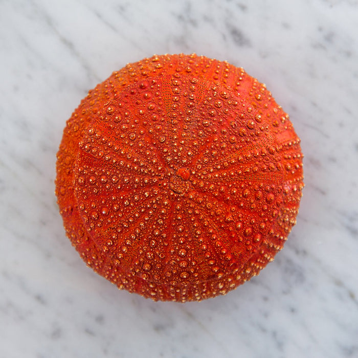 Burnt Orange Sea Urchin Jewelry Box