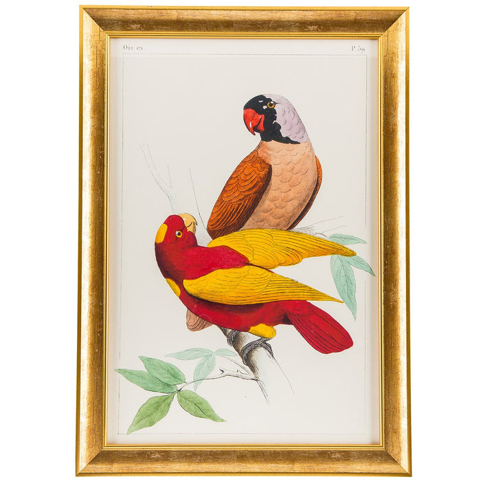 Cassell Parrots (Red and Multi) Print