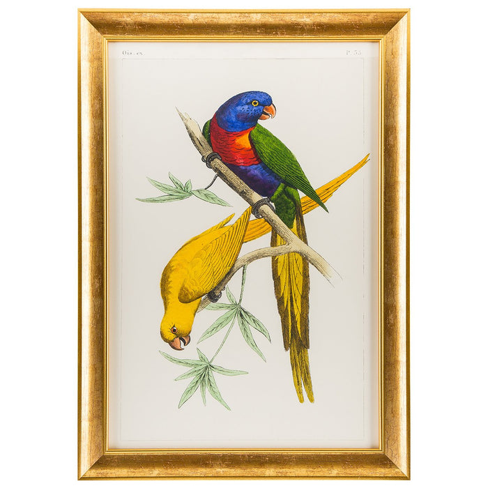Cassell Parrots (Yellow and Multi) Print