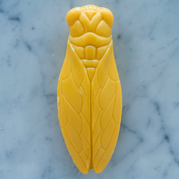 Cicada Honey Soap (100 grams)