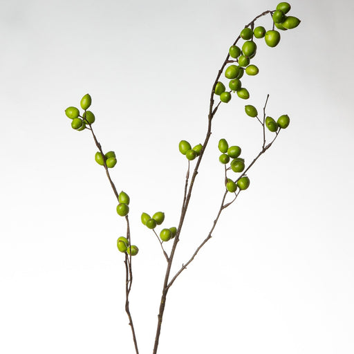 Green Berry Branch