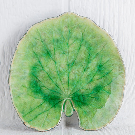 Medium Green Reniform Forest Leaf