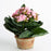 Potted Pink Kalanchoe Silk Flower