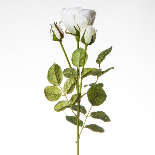 White Silk Garden Rose