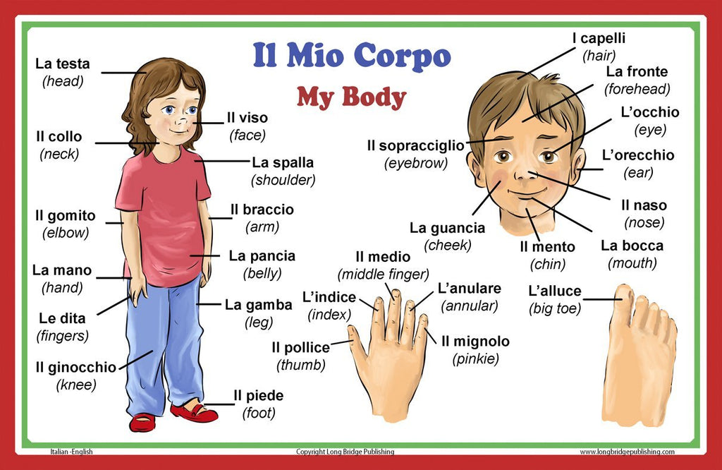 Italian Language School Poster - Words about Parts of the Body - Wall Chart for Home and Classroom - Italian and English Bilingual Text