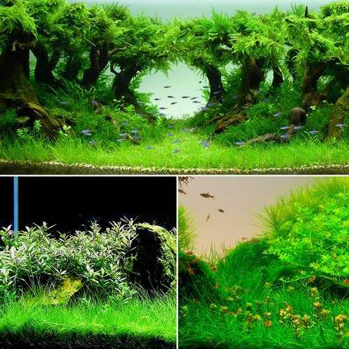 Yani Aquatic Plant Seeds Indoor Ornamental Grass Seed Grass Landscaping Decorations