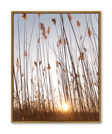 Pampas Grass Sunrise 80x100