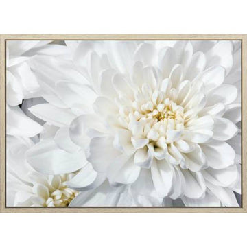 Chrysanthemum Flower 140x100