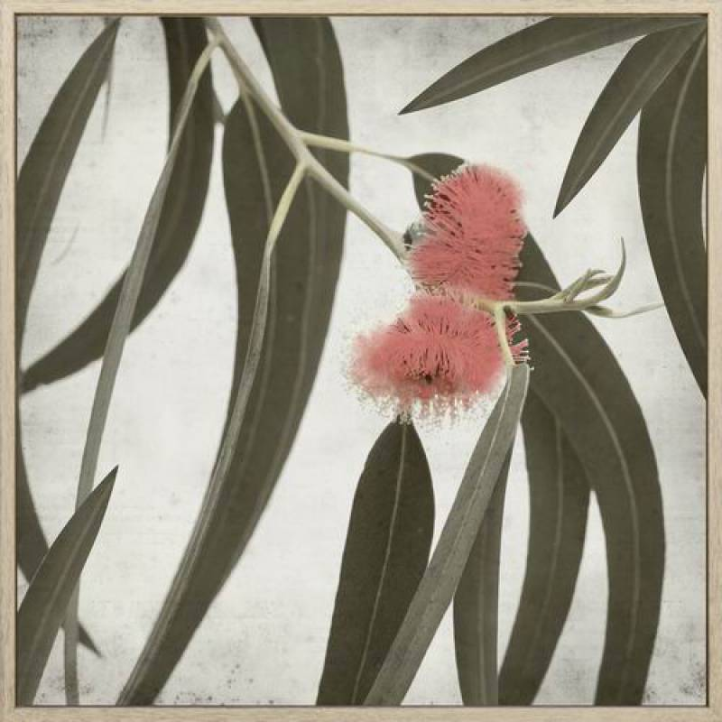 Eucalyptus 100x100 - PICK UP ONLY
