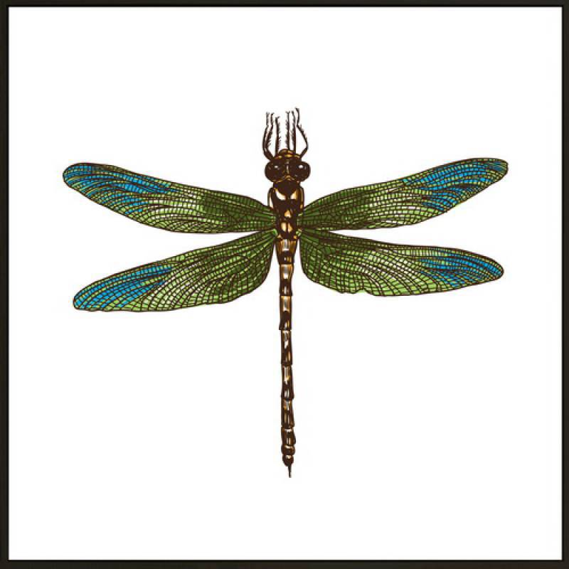 Dragonfly 80x80 - PICK UP ONLY