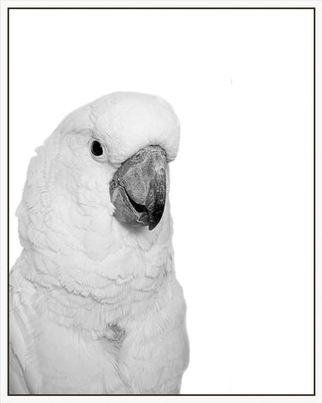 Cheeky Cockatoo 100x80